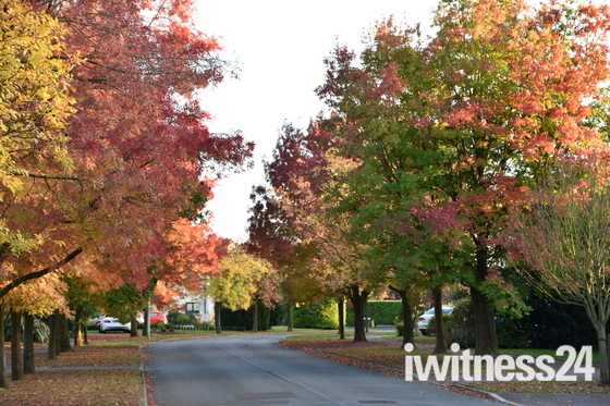 The colours that Autumn brings to our road...