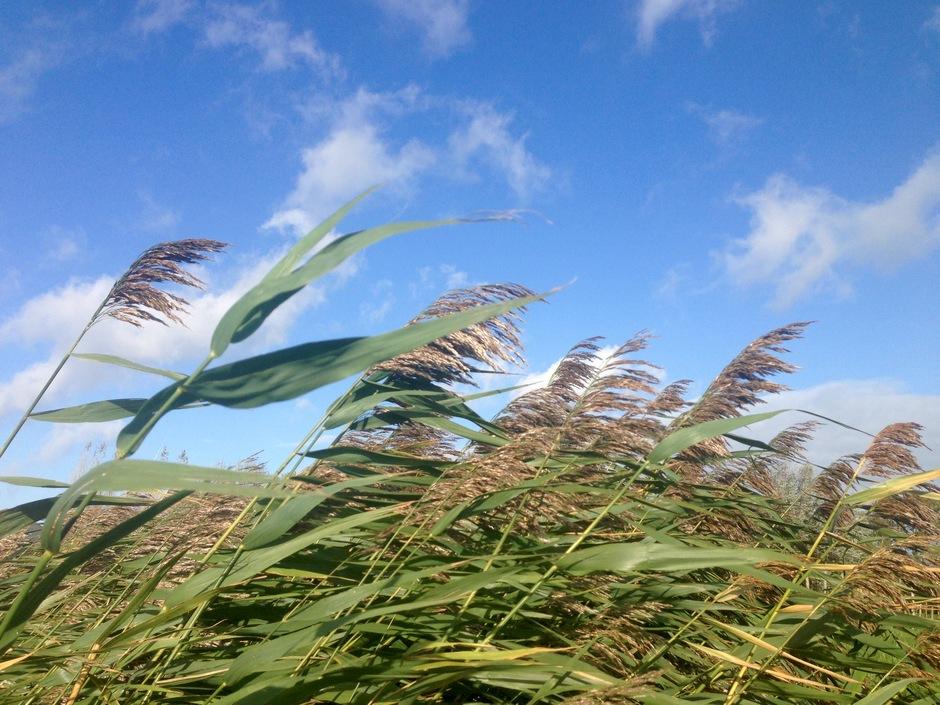 Herfst zon wind