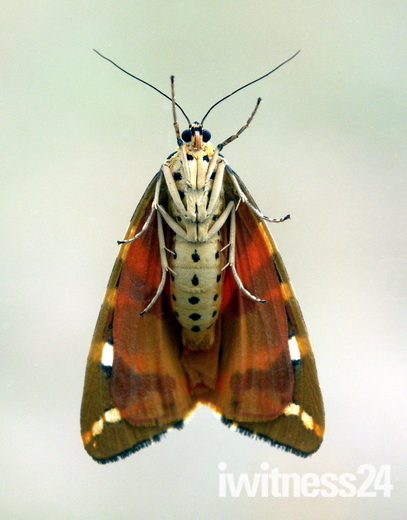 Unusual view of a moth