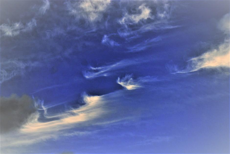 Fraaie Windveren op Dinsdagmorgen 14 November