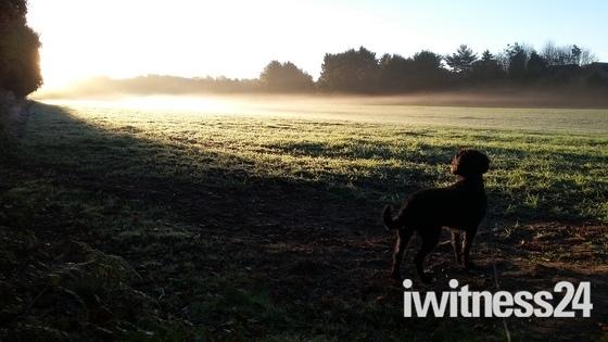 Early morning dog walk