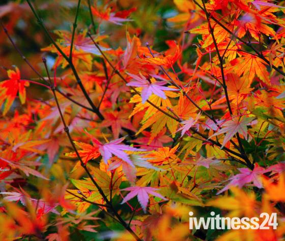 Winters colours