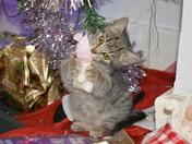 Christmas Claws