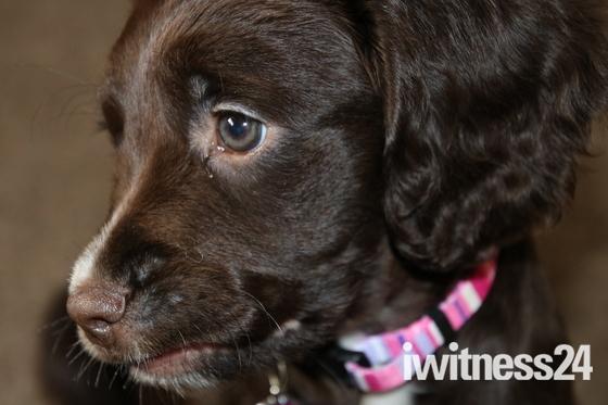 New: Puppy