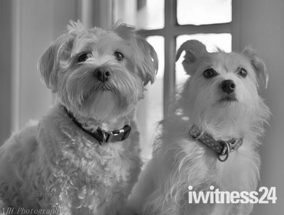 My dogs Eddie & Elsie
