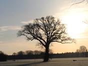 Cowick Barton Field