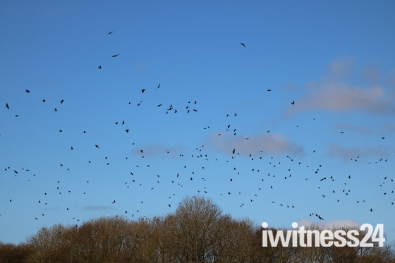 Crow Flypast