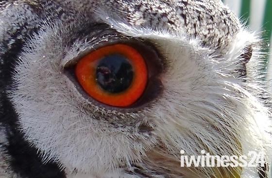 I to Eye!