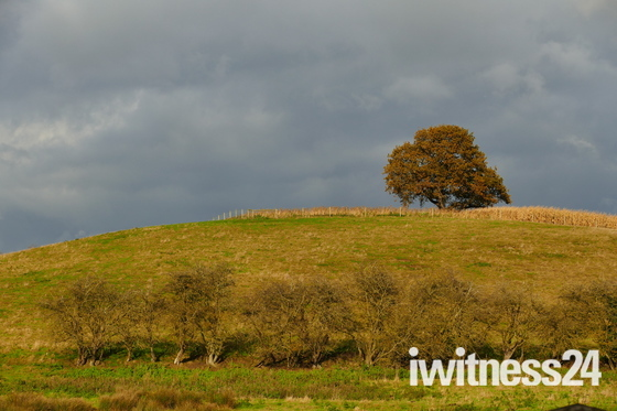 Lone Tree Against A Moody Sky
