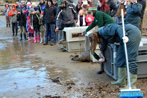 Rescued seal release.