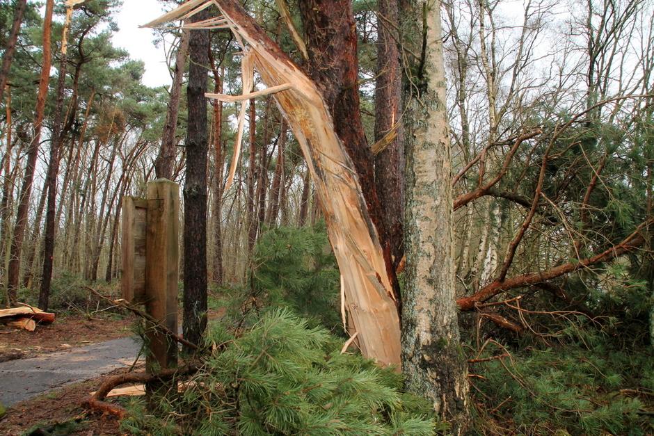 veel bomen geveld door de storm
