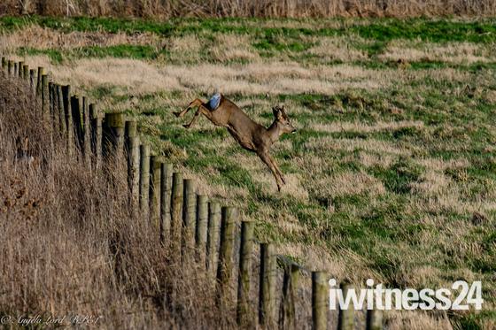 Fenland Widlife Walk