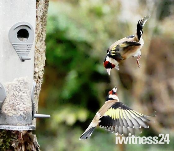 Fight in Flight.