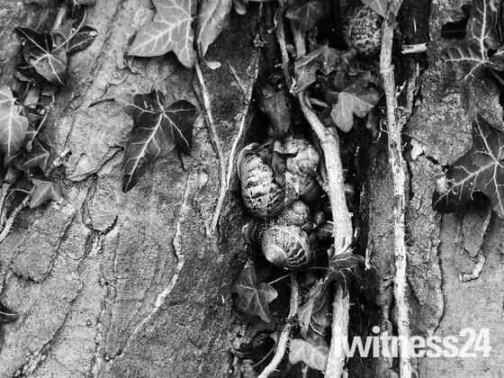 Snuggled Sheltered Snails