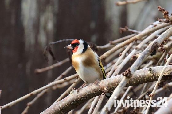 Back Garden Birds