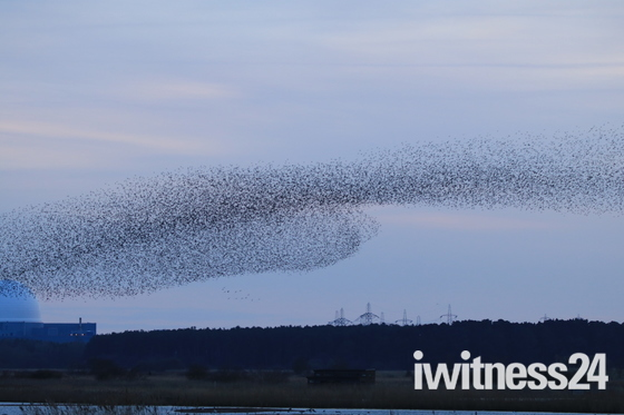 Another fantastic picture of murmuration over Minsmere looking over Size well