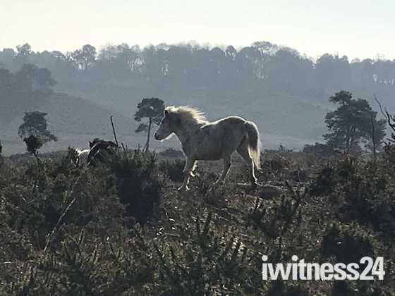 A magical encounter on Woodbury Common