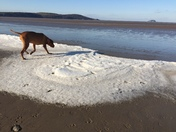a dog and the frozen sea
