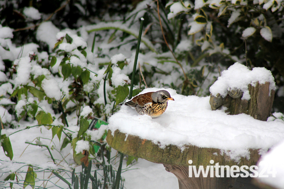 Wild life in our back garden when the beast from the East arrived this week
