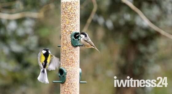 Birds needing assistance as the beast meets Emma