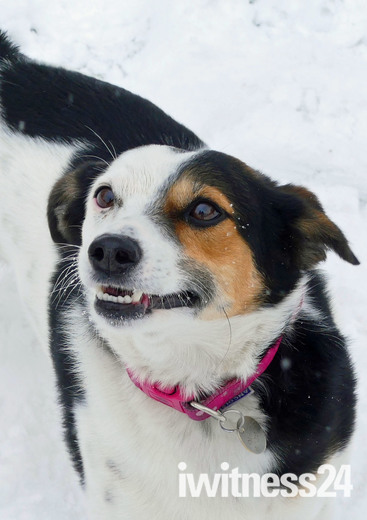 Lena enjoying the snow in Hadleigh