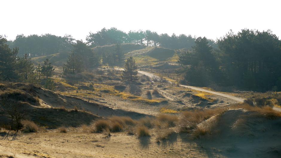 De natuur in Wassenaar geniet in het zonlicht