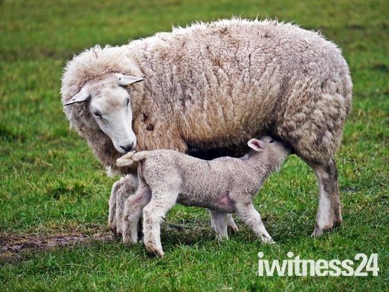 New Mum.