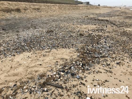 Gorleston shipwreck exposed? Coals shells timbers