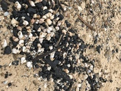 Gorleston shipwreck exposed? Coals shells timbers