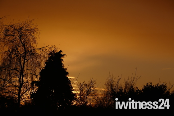 SILHOUETTE. Trees Against The Sunset