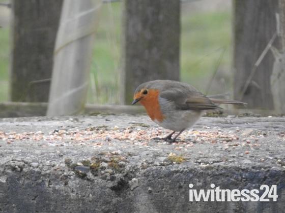 Ranworth broad wildlife