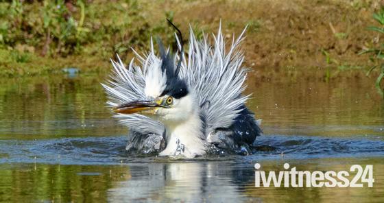 Freestyle heron hairdo