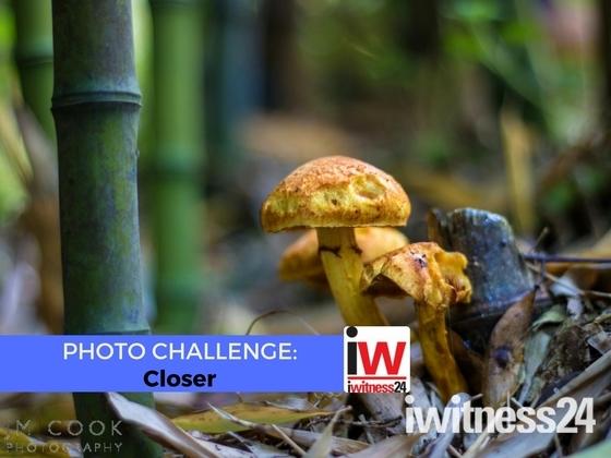 📸 PHOTO CHALLENGE 📸 Closer