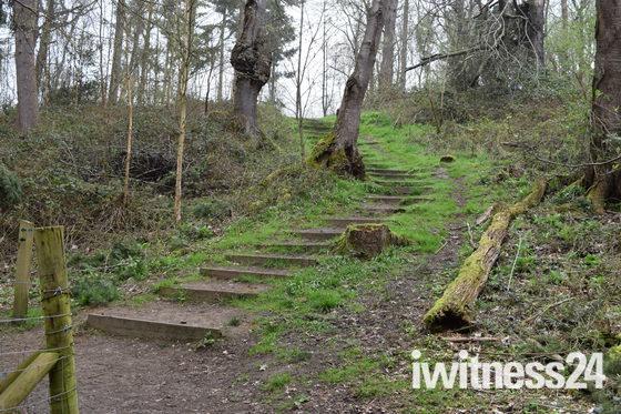 Woodland Wander