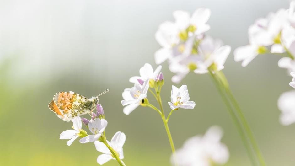 Vlinders op lentedag