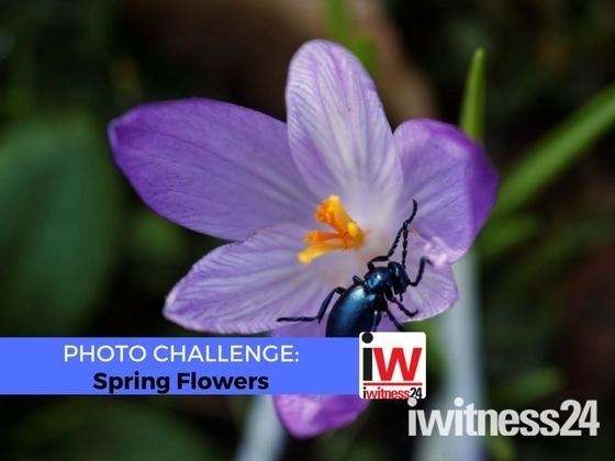 📸 PHOTO CHALLENGE 📸 Spring Flowers