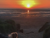 Fudge at Sunset