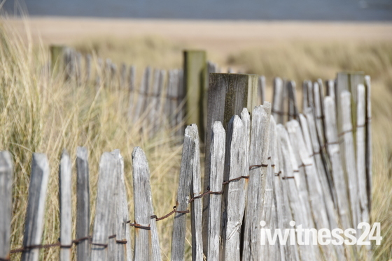 Winterton chestnut fence