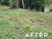 Forestry Commission destroy woodland habitat