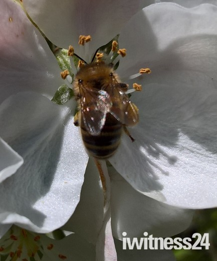 A Bee 🐝 Collecting Pollen