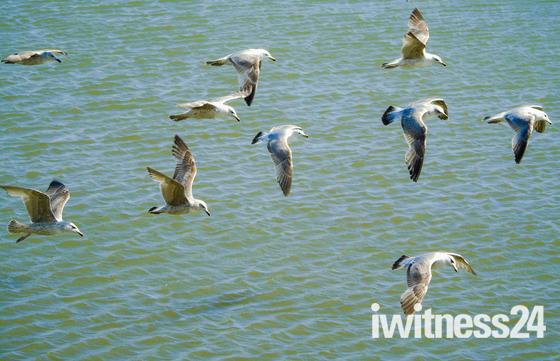 The Birds!