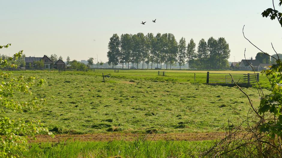 Gras maaien en drogen maar