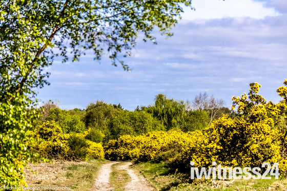Norfolk Pathways - Kelling Heath
