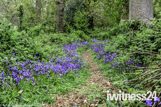 Norfolk Paths - Thursford Woods