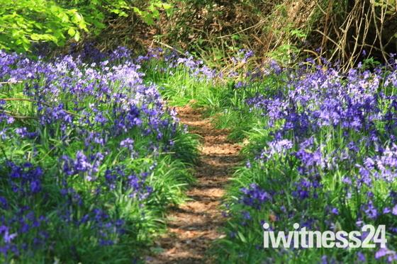 Norfolk Paths - Thursford Woods