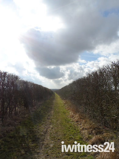 Norfolk paths