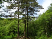 Late Spring in Offwell Woods