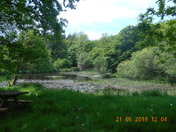 Offwell Woods pond