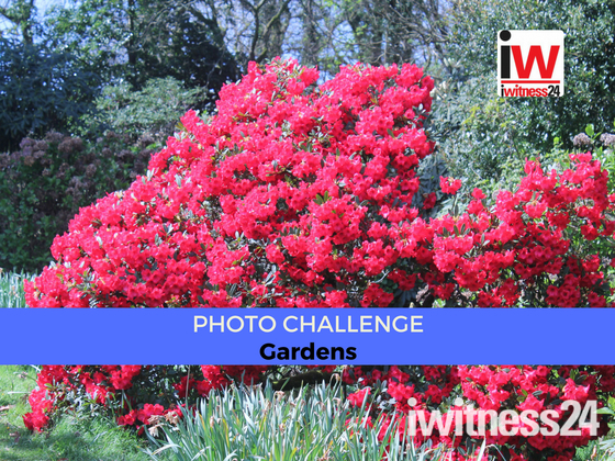 📸 PHOTO CHALLENGE 📸 Gardens