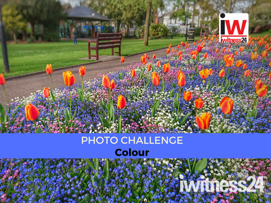 📸 PHOTO CHALLENGE 📸 Colour